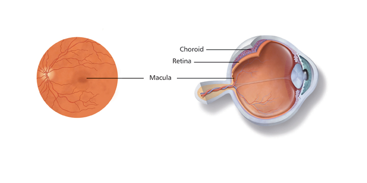 Diagram of how the eye works